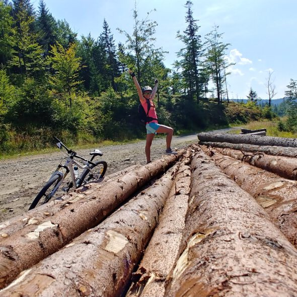 Belki ściętych drzew obok rower