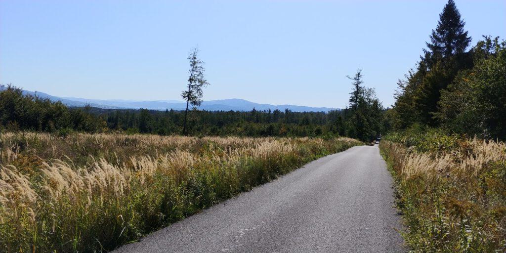 Długa prosta droga przez las a na horyzoncie góry beskidy