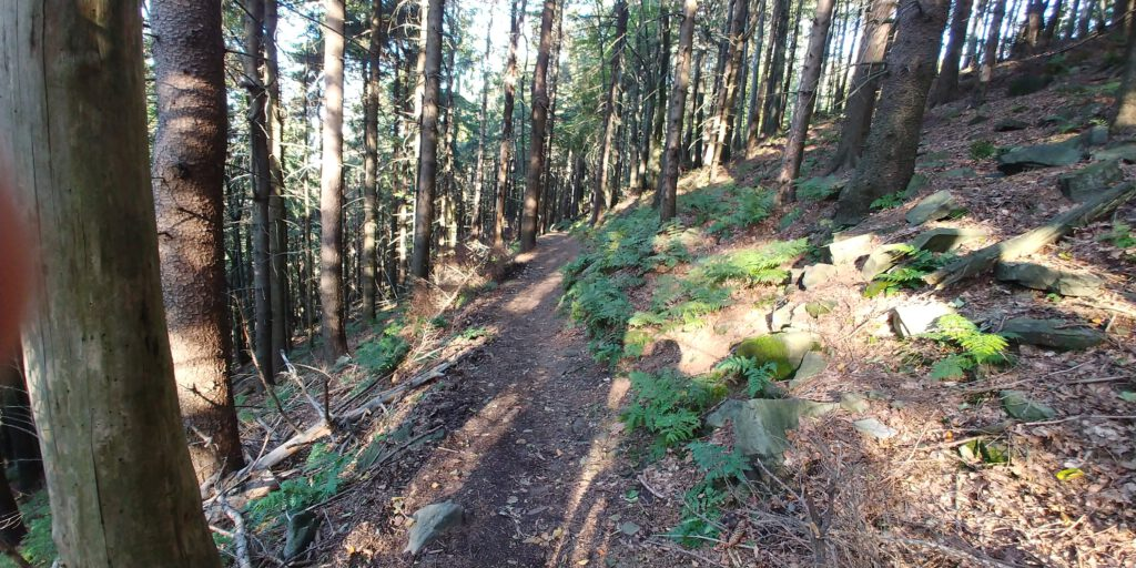 Leeśna ścieżka w górach z licznymi kamieniami