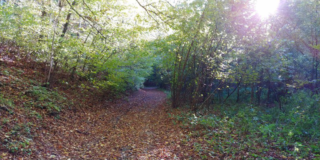 leśna droda zasypana liśćmi