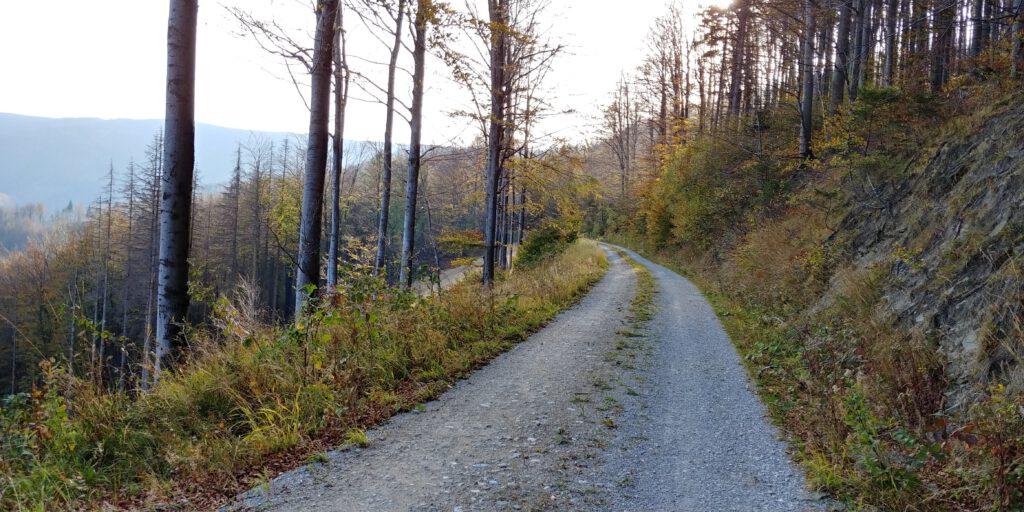 droga w lesie Tyra