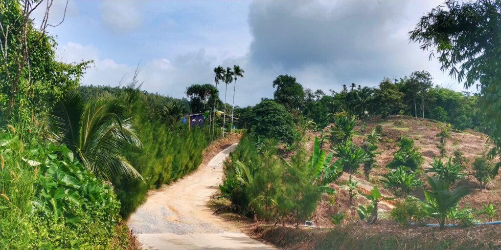 droga w dżungli chmury na niebie