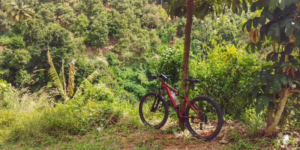 czerwony rower przypięty do drzewa