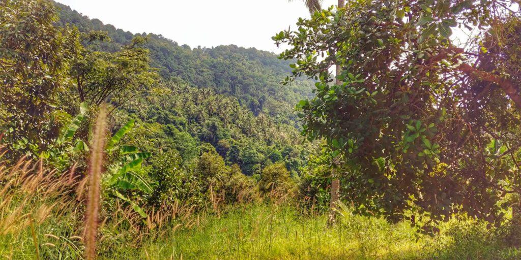 Dzungla zielona