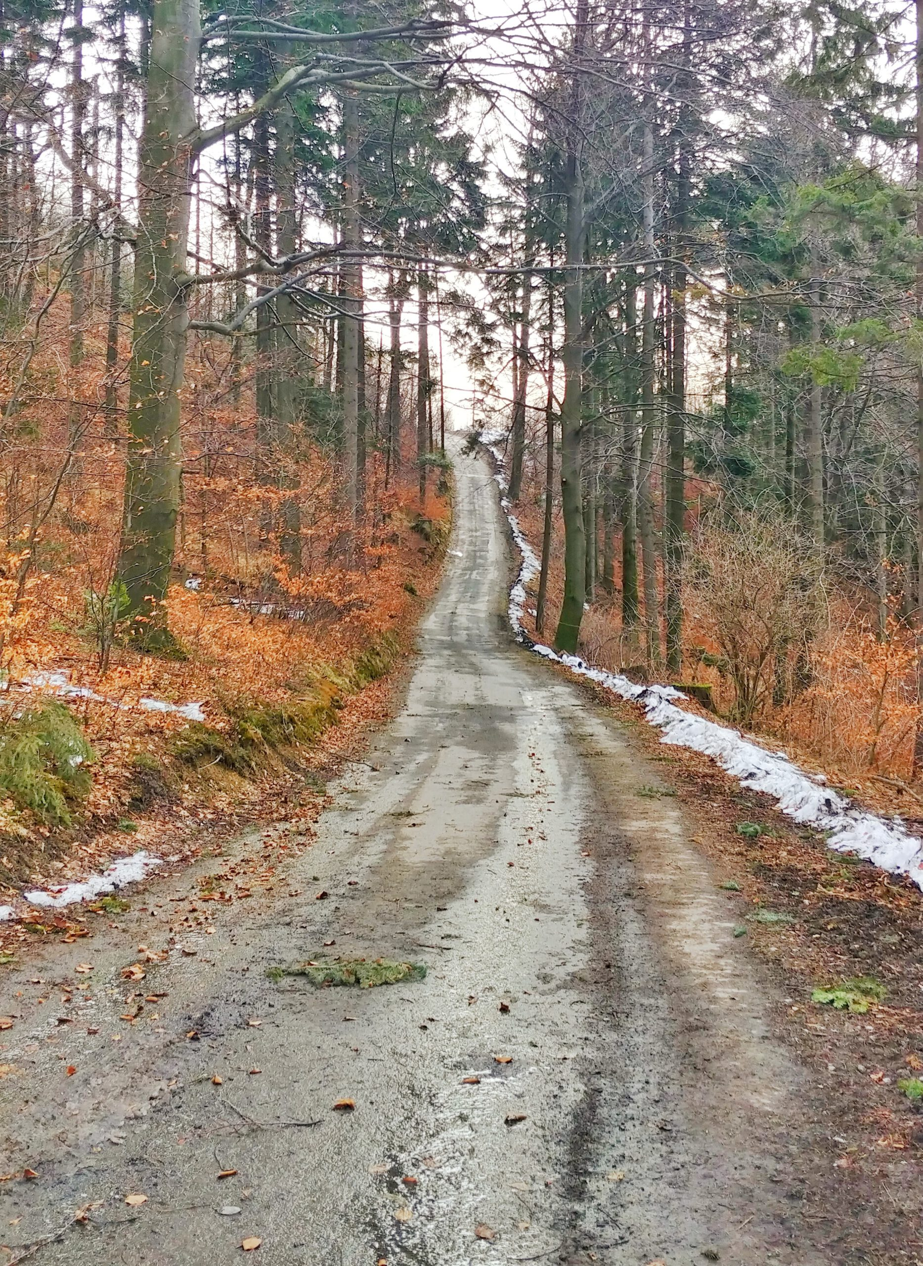 droga przez las, pod gókę