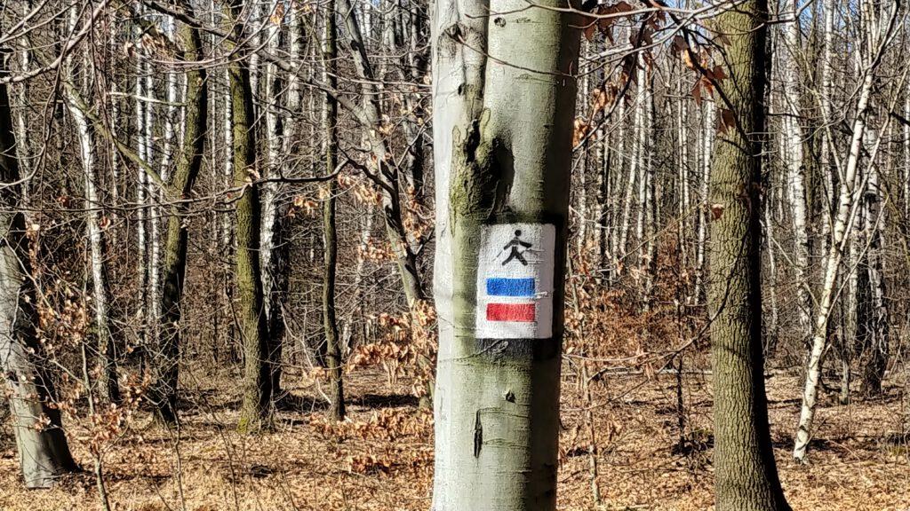 oznaczenie trasy nordick walking w lesie