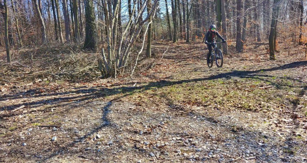 dziewczyna na rowerze w lesie