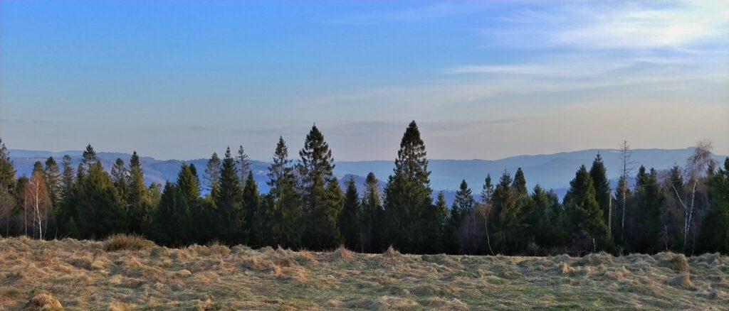 widok na góry na tle drzew