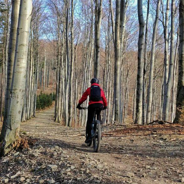 Rowerzysta w lesie bukowym