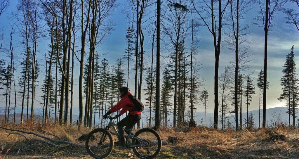 osoba na rowerze na tle drzew