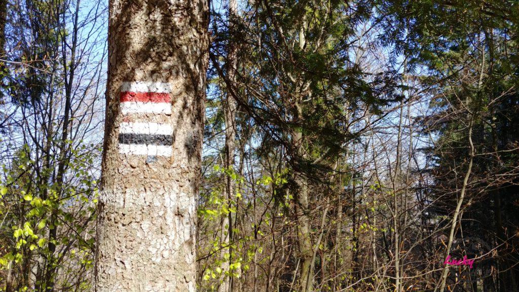 oznaczenie szlaku na drzewie