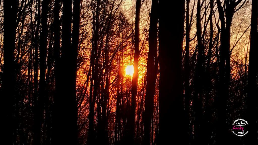 zachód słońca między drzewami
