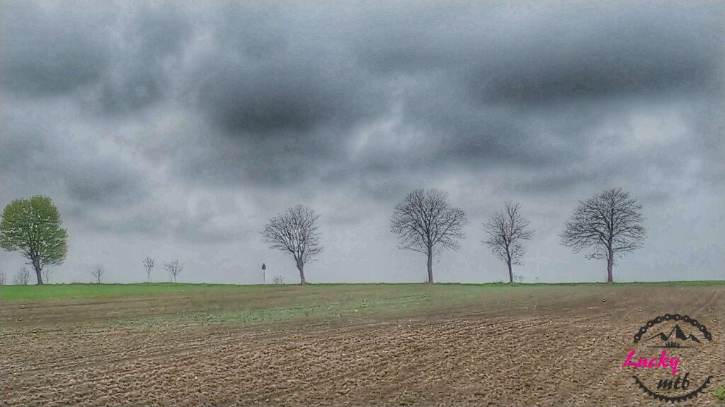 drzewa na tle pochmurnego nieba