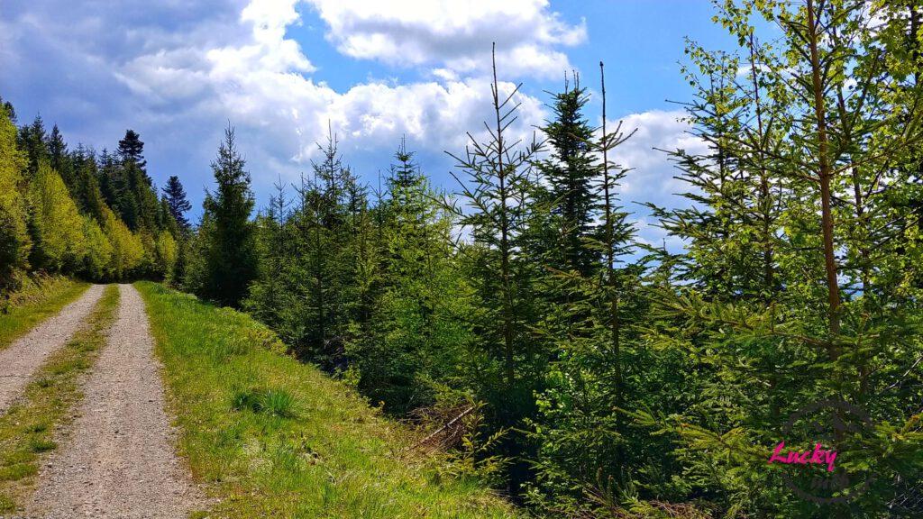 droga szutrowa w lesie