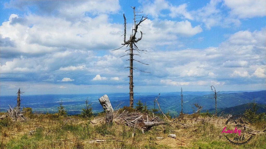 suche drzewo na tle gór