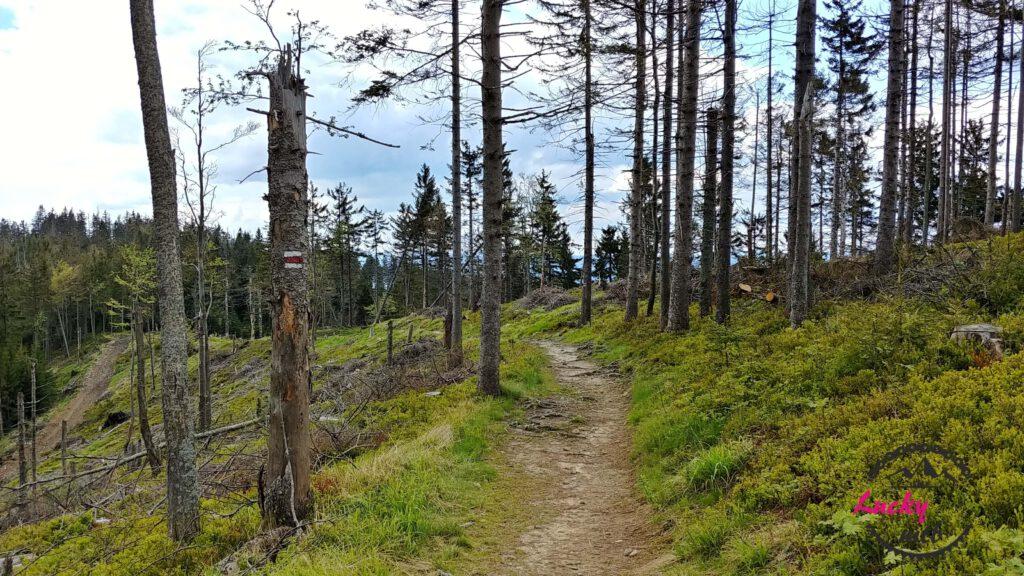 ścieżka w górach między drzewami