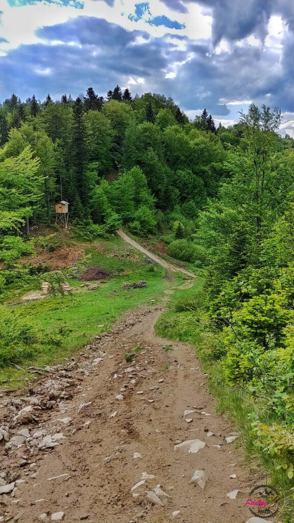 ścieżka na polanie górskiej