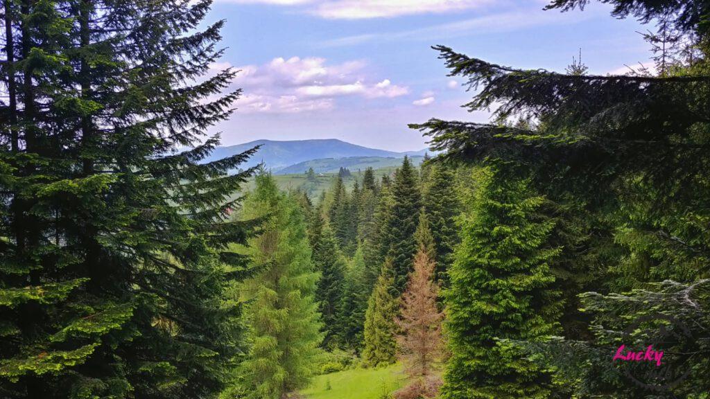 widok na góry między drzewami