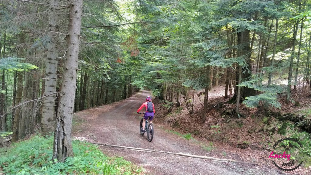 osoba jedzie na rowerze przez las