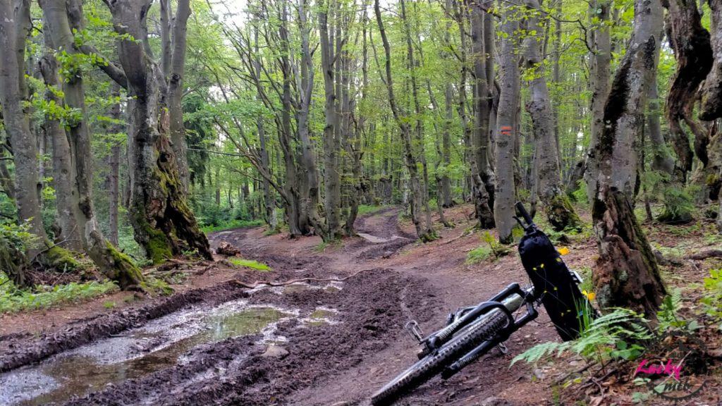 droga w lesie rower