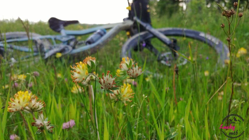 rower na trawie