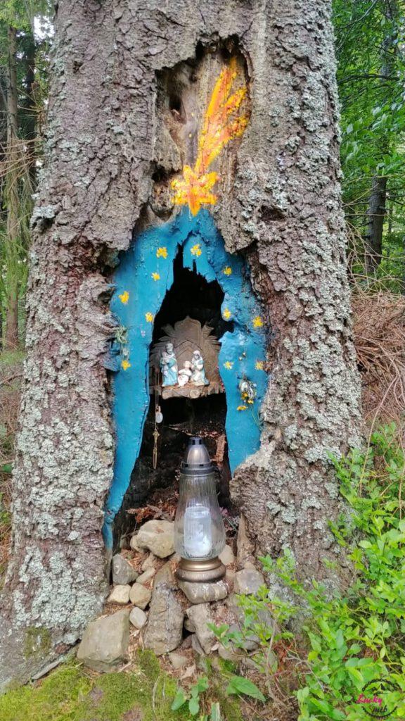 stajenka w drzewie