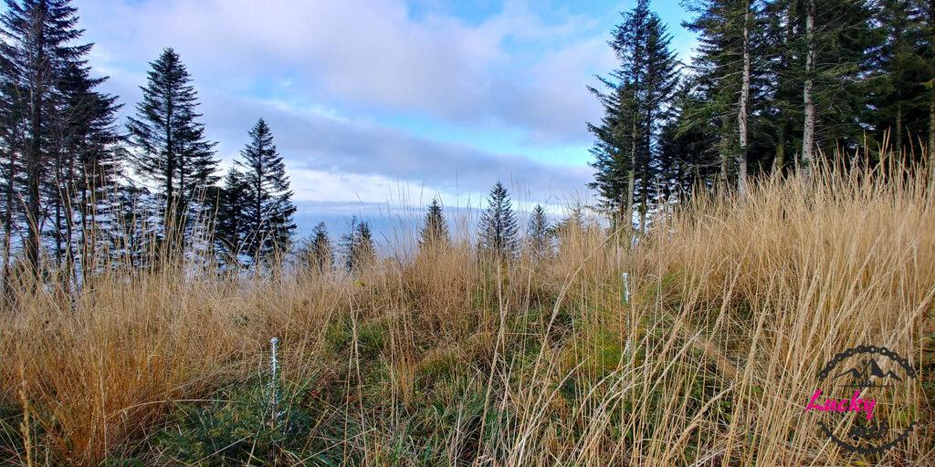 hrobacza łąka